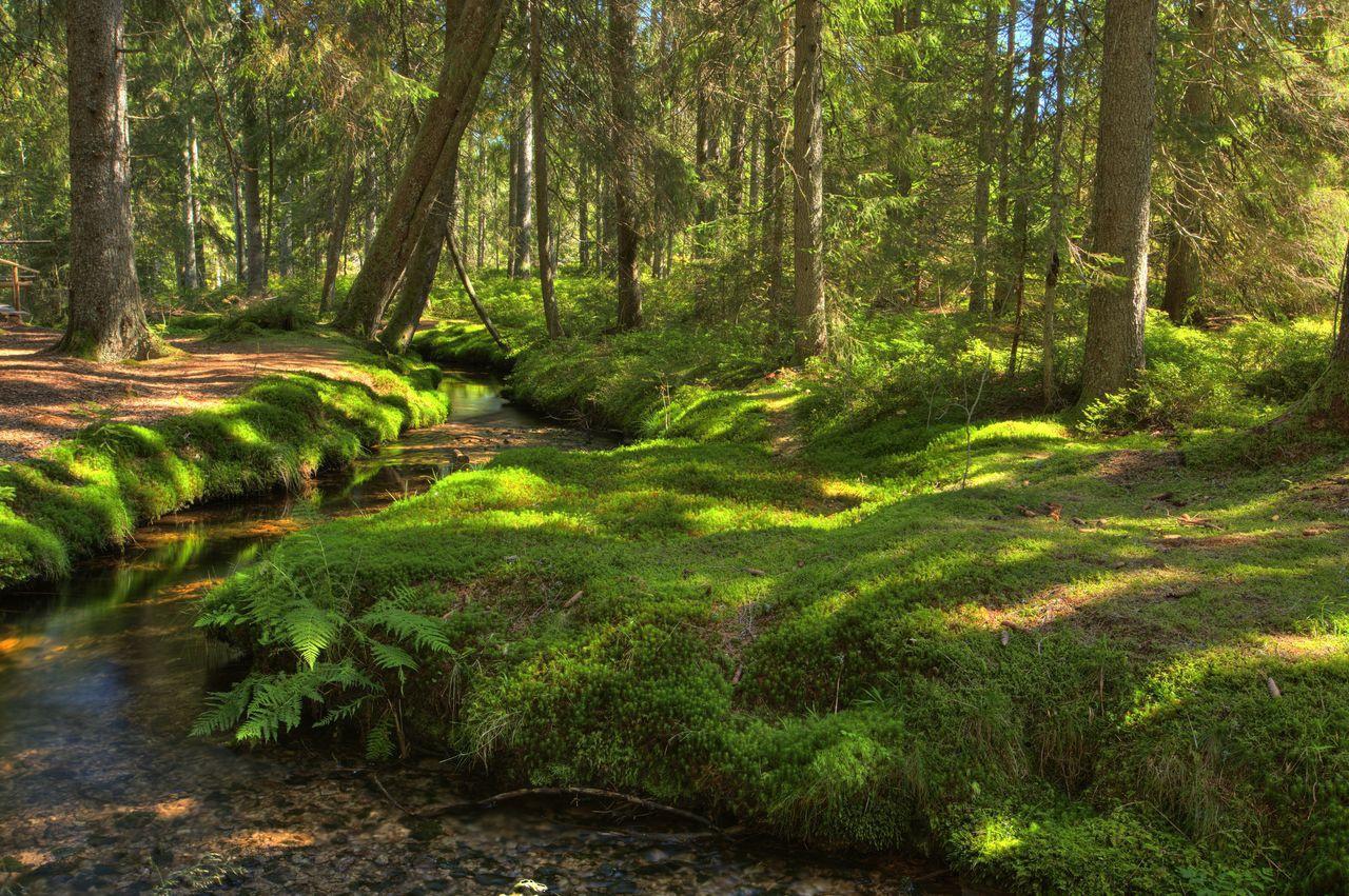 Bernau im Schwarzwald: Wiesen, Wälder, Weiden - Natur erleben im schönsten Hochtal im Naturpark ...